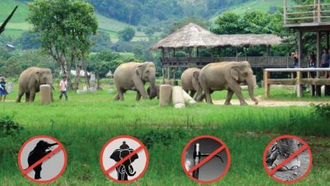Comment choisir un lieu des sanctuaires où les éléphants sont respectés en Thaïlande